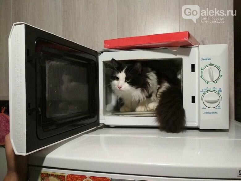 1 марта – День кошек. Отмечается ли в Александрове?, фото-2