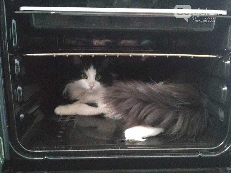 1 марта – День кошек. Отмечается ли в Александрове?, фото-3